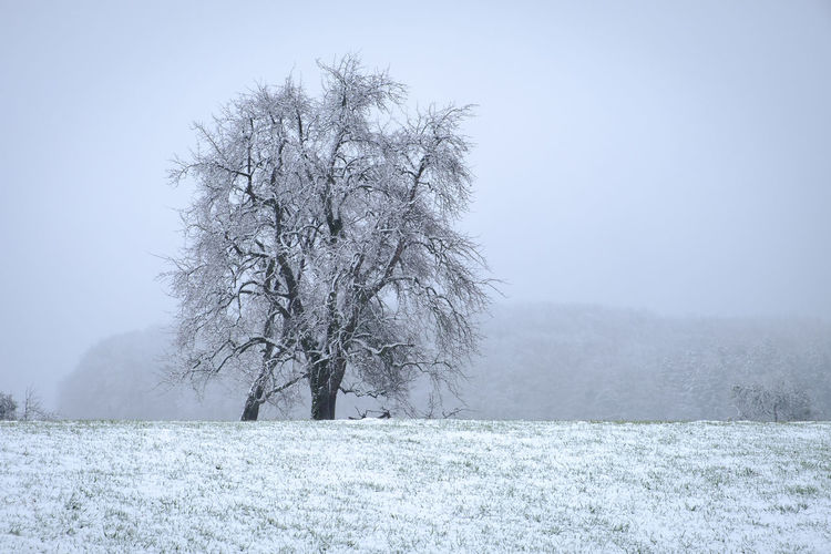 First Snow in southern Germany 2019 Winter Cold Temperature Snow Tree Beauty In Nature Bare Tree Plant Land Scenics - Nature Field Tranquil Scene Tranquility Landscape Environment White Color No People Nature Non-urban Scene Frozen Snowing Cold Outdoors Extreme Weather Blizzard Isolated