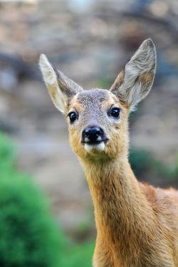 #Nature  #wildanimal #wildlife #wildlifephotography Animal Wildlife Animals In The Wild Mammal Nature One Animal Portrait
