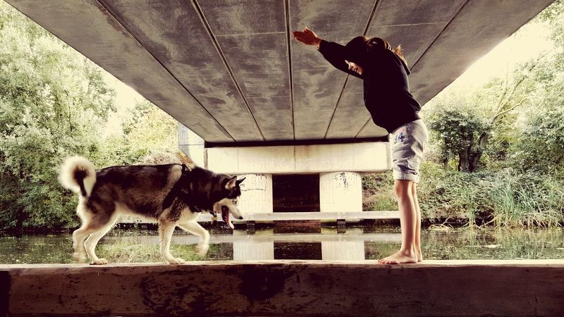 Bridge Husky ♡ Daughter Water Canal Outdoors Balance Teach The Dog To Dive