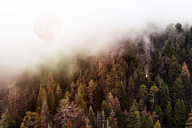 Mystical Forest with full red moon Tree Fog Plant Forest Land Beauty In Nature No People Scenics - Nature Nature Tranquil Scene Environment Tranquility WoodLand Sky Landscape Mountain Non-urban Scene Pine Tree Growth Evergreen Tree Outdoors Pine Woodland Coniferous Tree Red