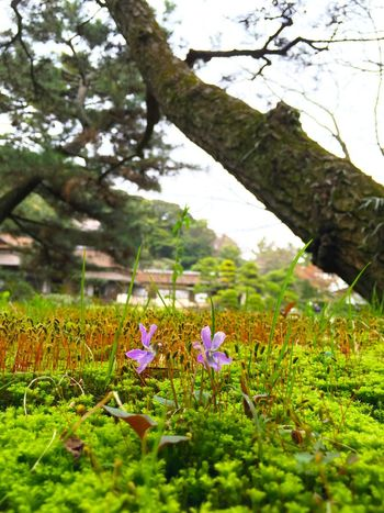 春だ。 Green Color Green Spring Is Coming  Spring Has Arrived Spring Landscape EyeEm Nature Lover Kanagawa Sankeien Sankei-en Showcase April Japanese Culture Japanese Style Japanese Garden
