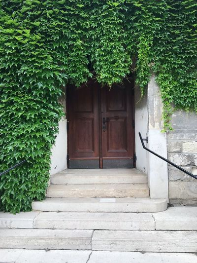 Plant Architecture Built Structure Entrance Door Building Exterior Growth Tree Day Closed No People Green Color Building Security Safety Nature Ivy House Protection Outdoors
