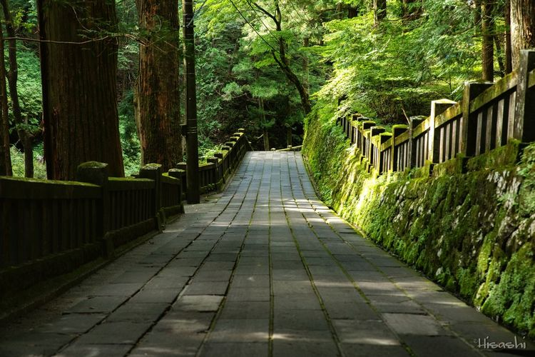 Tree The Way Forward Day Outdoors Growth No People Shadow Walkway Nature Footbridge Beauty In Nature