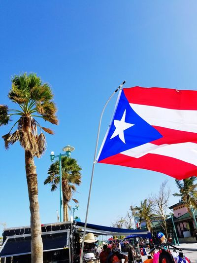 Flag Blue Tree Palm Tree Sky Patriotism Day Outdoors Low Angle View No People Clear Sky Nature City PUERTO RICO 🇵🇷 Caribbean Island Caribbean Life Puerto Rico Paradise Sun Puertoricotourism