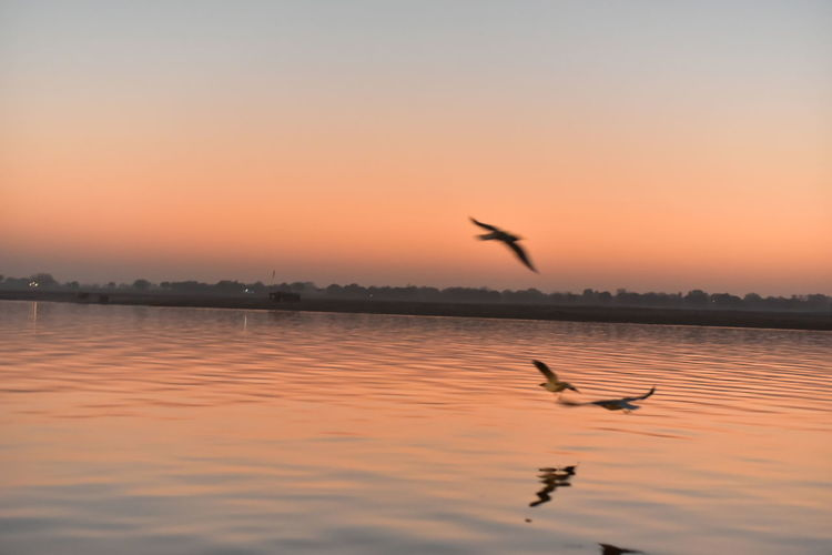 EyeEm Selects Sunset Bird Animal Wildlife Reflection Animals In The Wild Lake Silhouette Flying Nature Dusk Tranquility Dramatic Sky Scenics Beauty In Nature Animal Sky Water Flamingo Outdoors Tranquil Scene