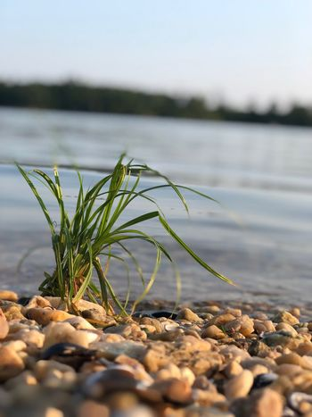 Grass on the lake edge EyeEm Selects Water Nature Plant Growth Day Tranquility Focus On Foreground No People Lake Selective Focus Beauty In Nature Beach Rock Green Color Outdoors Land Close-up Sky Surface Level Solid