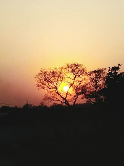 Sunset Silhouette Orange Color No People Beauty In Nature Nature Tree Outdoors Tranquility Sky Scenics Clear Sky Day