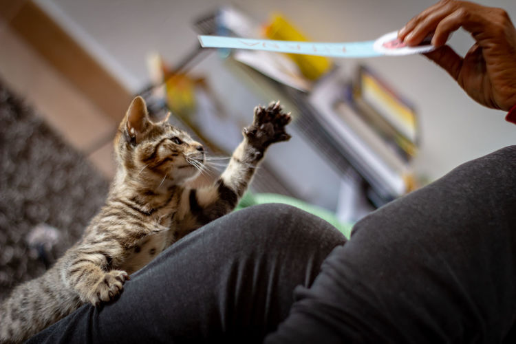 Low angle view of cat on hand