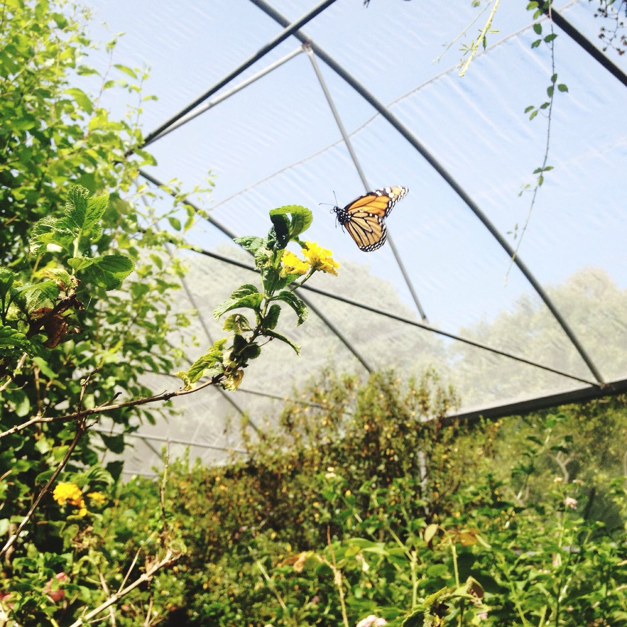 Low Angle View Of Butterfly Over Plants In Greenhouse