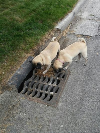 Dogs Storm Drain Sniffing Sniffing Around