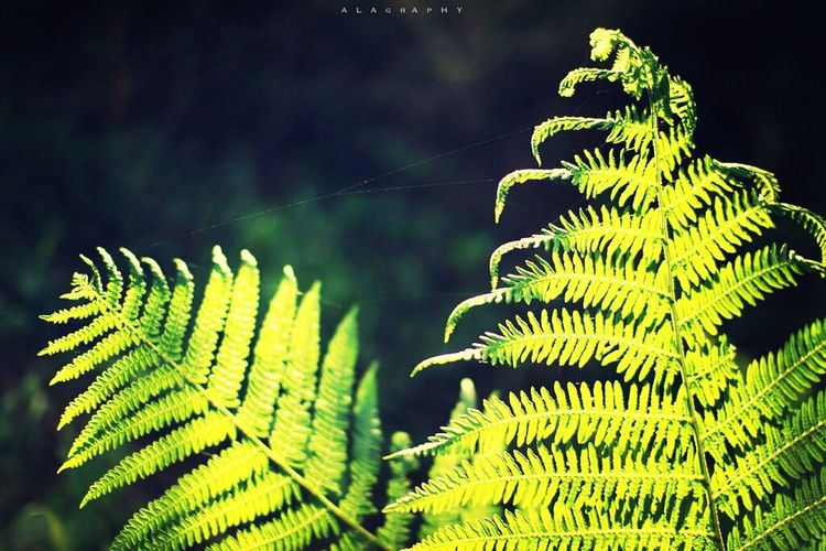 Fern Plant Eyeem Natur Lover Check This Out