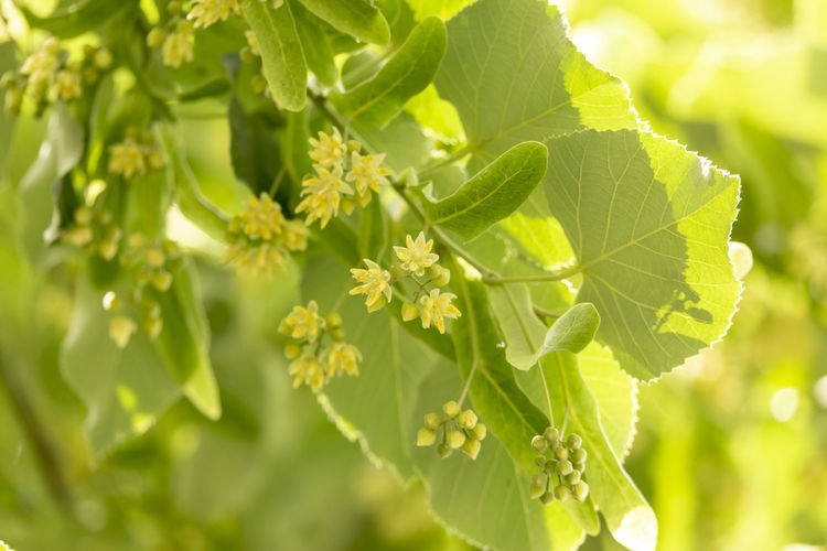 Close-up of fresh green leaves on plant