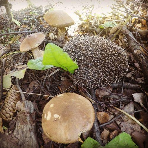 hedgehog Nature First Eyeem Photo