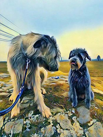 Togetherness Animal Themes Outdoors Close-up Dog Portrait Vinci App February 2017 How's The Weather Today? Dogwalk Pets Dogs Of Winter Irish Wolfhound Dogslife Dogs Of EyeEm Winter 2017 Cearnaigh