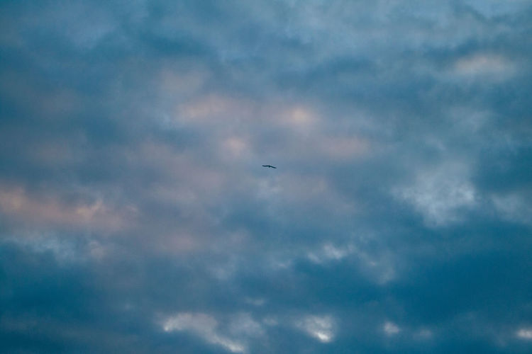 Low angle view of bird flying in sky