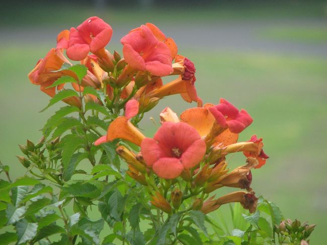 Nature Japan Flower