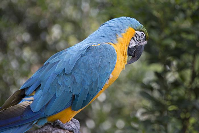 Parrot Polly Want A Cracker Parrots Birds Birds🐦⛅ Nature Animals Animal Photography