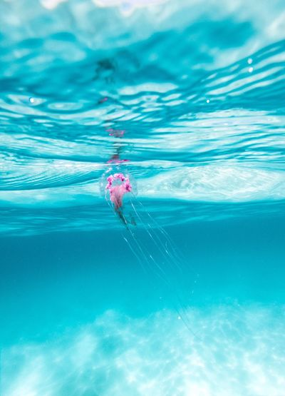 Danger and beauty at the same time Natgeo Gopro Australia Blue Jellyfish Dangerous Nature Venom Water Nature Trip Real People Leisure Activity One Person Outdoors Sea Vacations Day Swimming Blue Holiday Beauty In Nature Animal Rippled Turquoise Colored Underwater UnderSea Animal Themes