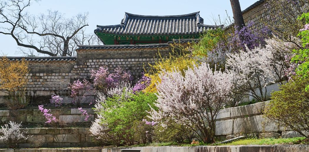 Low angle view of purple flowering plant against building