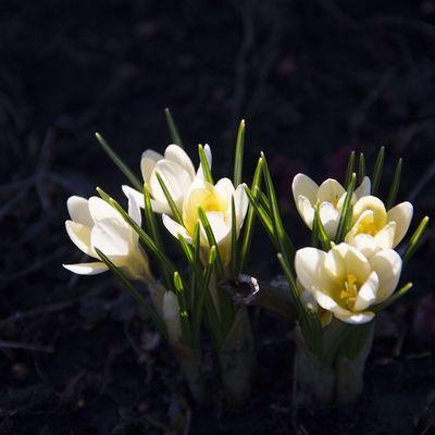 Вот она пришла весна , как паранойя... Хорошеенастроение классная Погода цветочки spring good mood beauty flowers