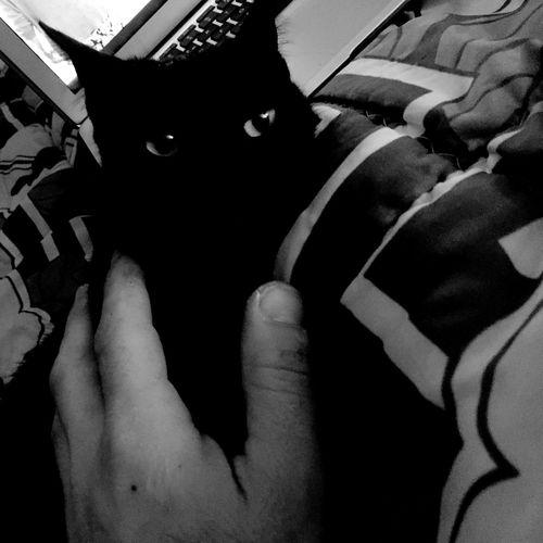 Black Cat Body