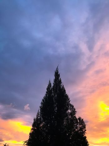 EyeEm Selects Tree Sky Silhouette Beauty In Nature Cloud - Sky Sunset Nature Growth Low Angle View No People Outdoors Scenics Day