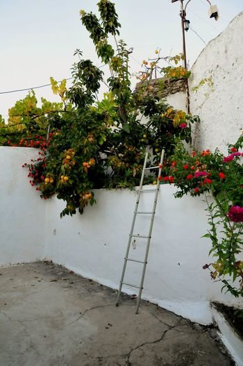 Potted plant by wall against building