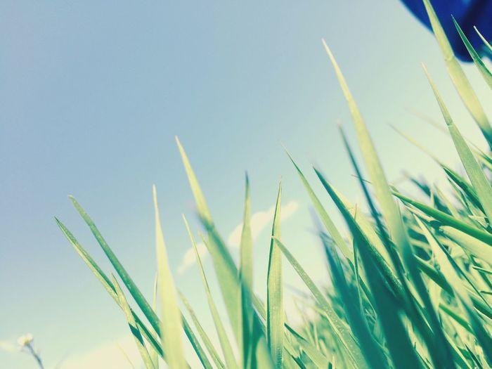《草原》〜ソウゲン〜