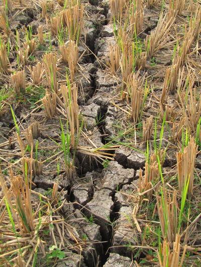 the ground dry