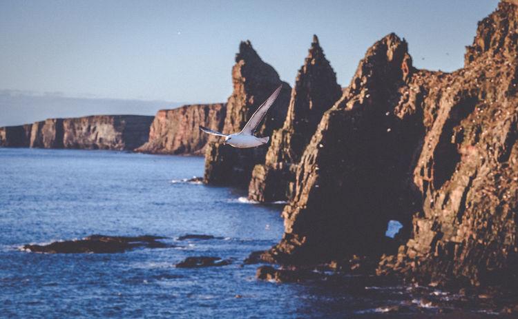 Close-up Durness Nature No People Scenics Scotland Scotland 💕 Sea Seagull Stacks  Water