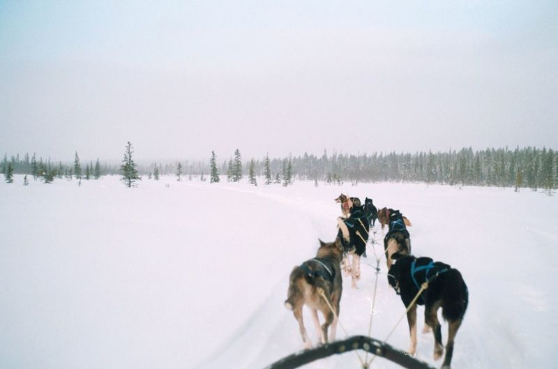 The Great Outdoors - 2016 EyeEm Awards Sweden Huskies Explore Film Filmisnotdead Analogue Photography Film Photography Wandering Adventure