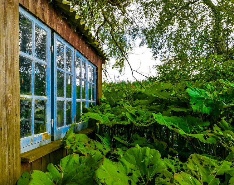 Ry, Denmark Plant Green Color Growth Tree Window Day Nature No People Plant Part Leaf Transparent Glass - Material Architecture Outdoors Reflection Beauty In Nature Built Structure House Forest Botany Window Frame