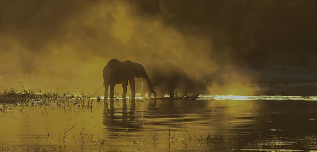 Elephants drinking from a river in a dusty sunset . Isolated Silhouette Twilight Africa Animal Themes Animals In The Wild Beauty In Nature Big Five Dusty Elephant Elephants Drinking Golden Hour Lake Mammal Nature No People Reflection Silhouette Sky Sunset Togetherness Water Waterfront