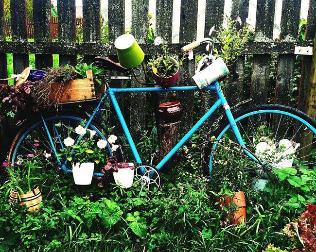 композиция велосипед клумба оформление дизайн Flowers Flowerporn Flower Power Bycicle Eye4photography