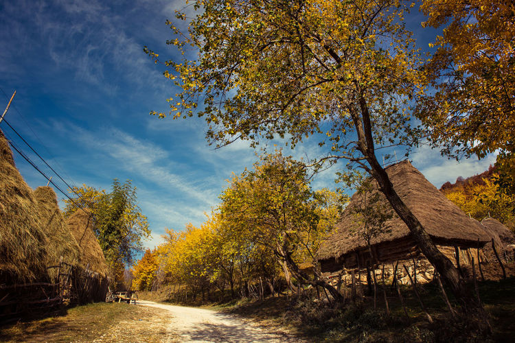 Empty Road Amidst Trees And Thatched Roofs On Field