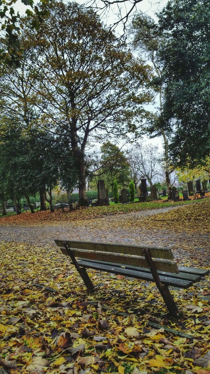 tree, autumn, park - man made space, leaf, nature, change, tranquility, beauty in nature, day, outdoors, no people, growth, scenics, sky