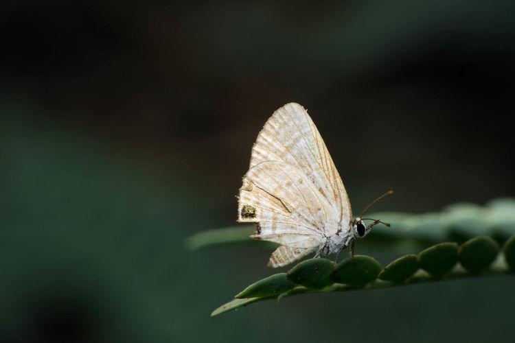 Butterfly Single EyeEm Nature Lover Macroclique