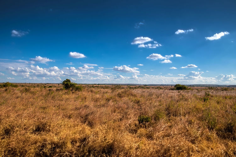 Sky Cloud - Sky Environment Scenics - Nature Tranquil Scene Landscape Land Plant Tranquility Beauty In Nature Grass Field Non-urban Scene Blue Nature No People Day Remote Horizon Over Land Growth Arid Climate Semi-arid Kenya Field Plains