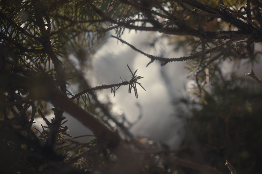 Fiftyshades_of_nature Utah Tree Pinaceae Nature Animal Wildlife Pine Tree Morning No People Beauty In Nature Branch Winter Outdoors