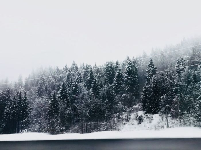 EyeEm Best Shots Nature Forest Cold Temperature Winter Snow Tree Weather Nature Tranquil Scene No People Frozen Landscape Scenics Tranquility Fog Pine Tree Forest Outdoors Snowing Day Beauty In Nature Snowdrift Shades Of Winter