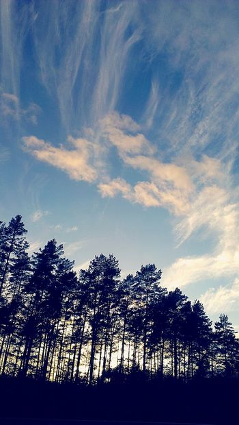 Coucher De Soleil Pin Arbres Nuages Sunset Pine Trees Clouds And Sky Nature On Your Doorstep RemiB 040116 Campagne