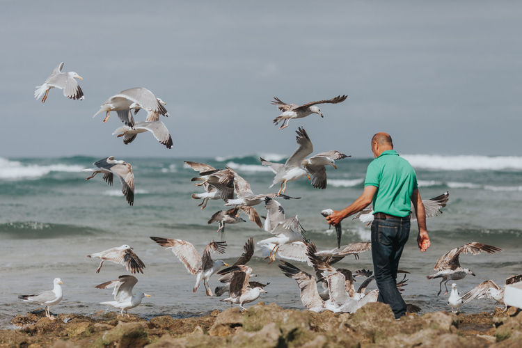 Animal Wildlife Animals In The Wild Beach Bird Day Flock Of Birds Flying Full Length Large Group Of Animals Lifestyles Men Motion Nature Outdoors Portugal Real People Sea Sea Life Seagull SEAGULL IN FLIGHT Seagulls Seagulls And Sea Spread Wings Water The Photojournalist - 2017 EyeEm Awards Place Of Heart Summer Exploratorium
