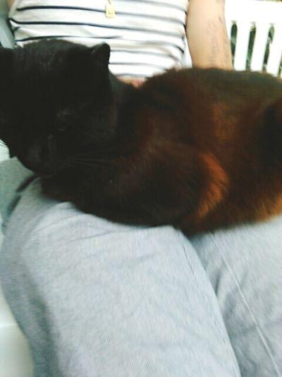 Titi Cat♡ Chat Mon Amour Love Roux Noir