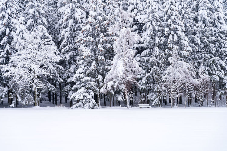 Close up of snowy pine trees with bench on a winter landscape Winter Snow Cold Temperature Tree Plant White Color Snowing Land Tranquil Scene Beauty In Nature Nature Forest Scenics - Nature Tranquility Frozen Day No People Storm Landscape Blizzard Extreme Weather Pine Tree Coniferous Tree