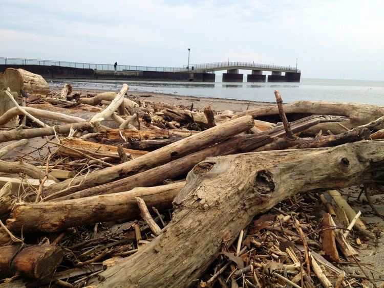 Debris on the beach from the storm at Lake Erie