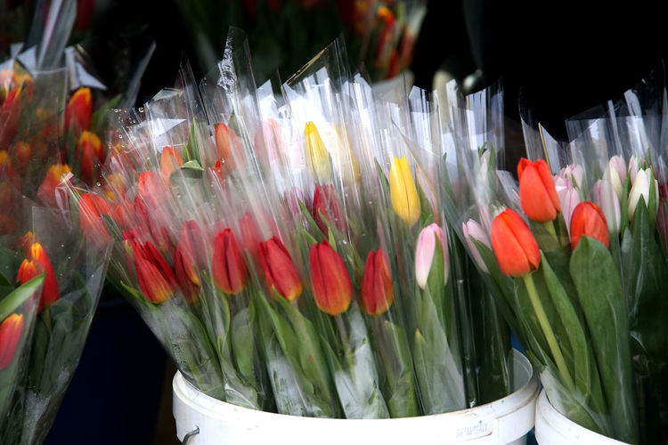 Close-up of multi colored flowers in glass for sale