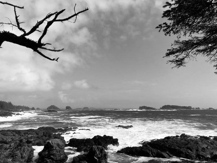 Sky Sea Tree Beauty In Nature Water Scenics - Nature Nature Plant Rock Cloud - Sky Land Rock - Object No People Beach Tranquility Day Solid Outdoors Tranquil Scene Horizon Over Water Giant Waves Pacific Ocean Spring Storms Surf Pacific Rim National Park Ucluelet Coastline Dangerous Seas Ship Wrecks