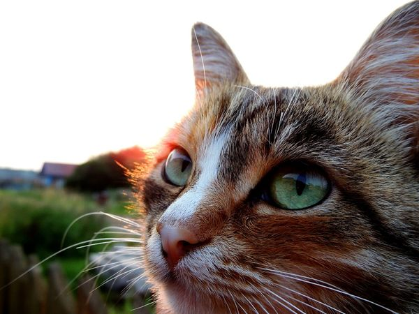 Hello World Summer Contry Green Color Photo Cat Cat Lovers Macro Cat