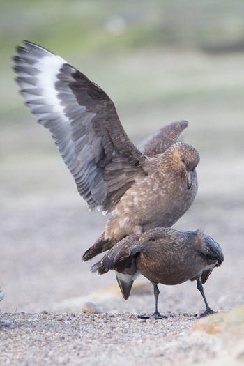 Birds flying over land