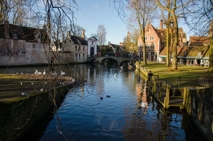 Canal in Brugge Architecture Bird Built Structure Canal City Old Town Reflection Swan Water Waterfront